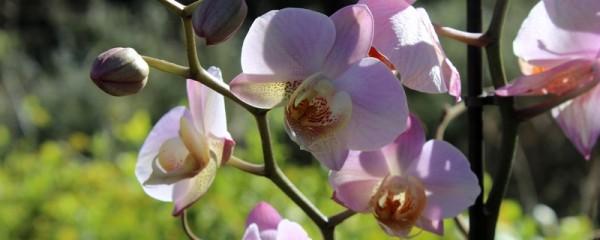 Provence Lieu Saint Pierre de Vassols Fleurs