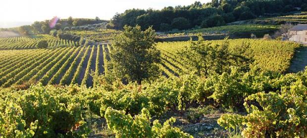 Un sentier à la découverte des vignobles de Cairanne